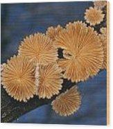 A Common Split Gill Mushrooms Sit Wood Print by Darlyne A. Murawski