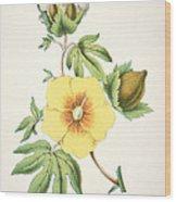 A Cotton Plant Wood Print