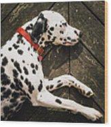 A Dalmatian Sleeping On A Wooden Deck Wood Print