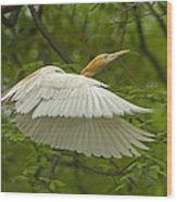 A Day With Egrets Wood Print