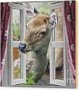 A Deer Enters The House Window. Wood Print
