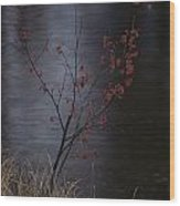A Delicate Young Tree Blossoms Wood Print