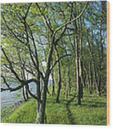 A Dirt Path Winds Through A Waterside Wood Print
