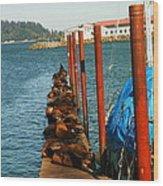 A Dock Of Sea Lions Wood Print by Jeff Swan