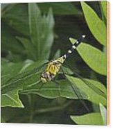 A Dragonfly Resting On A Leaf Wood Print by George Grall