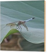 A Dragonfly Resting On A Lily Pad Wood Print
