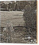 A Far Valley Sepia Wood Print