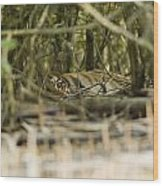 A Female Tiger Rests In The Undergrowth Wood Print
