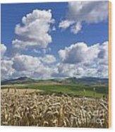 A Field Of Barley . Auvergne. France Wood Print