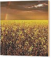 A Field Of Canola With A Rainbow Wood Print