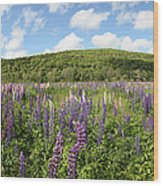 A Field Of Lupines Wood Print