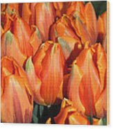 A Field Of Orange Tulips Wood Print