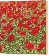 A Field Of Poppies Wood Print by Richard Nowitz