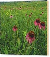 A Field Of Purple Coneflowers Wood Print