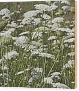 A Field Of Queen Annes Lace Wood Print