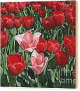 A Field Of Tulips Series 3 Wood Print