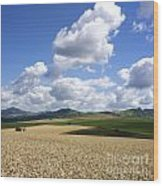 A Field Of Wheat Auvergne. France Wood Print
