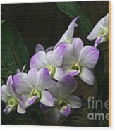 A Flight Of Orchids Wood Print