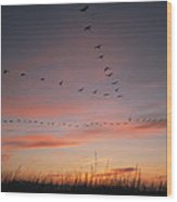 A Flock Of Common Cranes Flying Wood Print