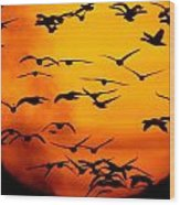 A Flock Of Geese Is Silhouetted Wood Print