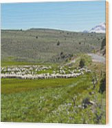 A Flock Of Sheep 2 Wood Print