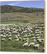 A Flock Of Sheep Wood Print
