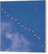 A Flock Of Snow Geese Chen Wood Print
