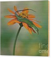 A Flower For Me Wood Print