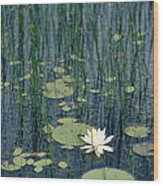 A Flowering Water Lily In Black Wood Print