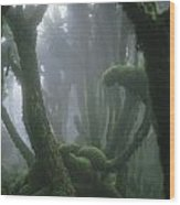 A Fog-enshrouded Rain Forest In Rwandas Wood Print
