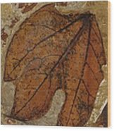 A Fossilized  Sassafras Leaf Wood Print