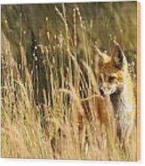 A Fox In A Field Wood Print