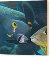 A French Angelfish Swims Up Close Wood Print