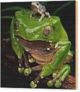 A Frog Phylomedusa Bicolor Perched Wood Print