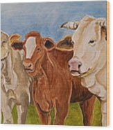 A Gathering Of Cows Wood Print