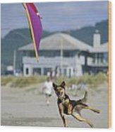 A German Shepherd Leaps For A Kite Wood Print