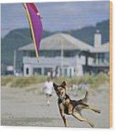 A German Shepherd Leaps For A Kite Wood Print