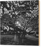 A Ghost In The Cherry Blossoms Wood Print
