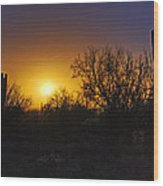 A Golden Saguaro Sunrise Wood Print