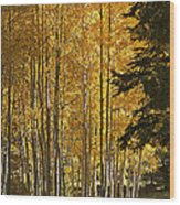 A Golden Trail Wood Print