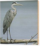 A Graceful Gray Heron Standing On A Log Wood Print