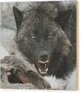 A Gray Wolf, Canis Lupus, Growls Wood Print