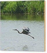 A Great Blue Heron Landing Wood Print