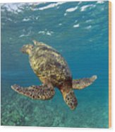 A Green Sea Turtle Diving In Clear Water Wood Print