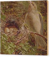 A Greenfinch At Its Nest Wood Print