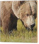 A Grizzly Bear Ursus Arctos Horribilis Wood Print
