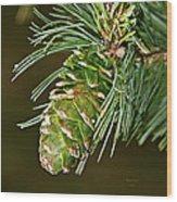 A Growing Pine Cone Wood Print