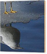 A Gull Reflects Wood Print