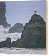 A Gull Sits On A Rock At Cannon Beach Wood Print