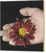 A Hand Holding A Red Rover Wood Print